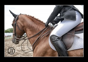 equine photography zionsville carmel indianapolis noblesville